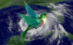 Hurricane and Hummingbirds